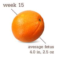 15weeks